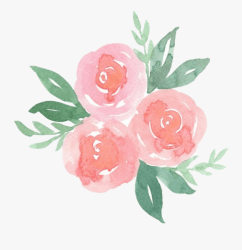 aesthetic pastel flower rose pretty flowers clipart transparent sticker pink watercolor clipartkey