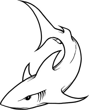 shark drawing outline hammerhead basic clipartmag