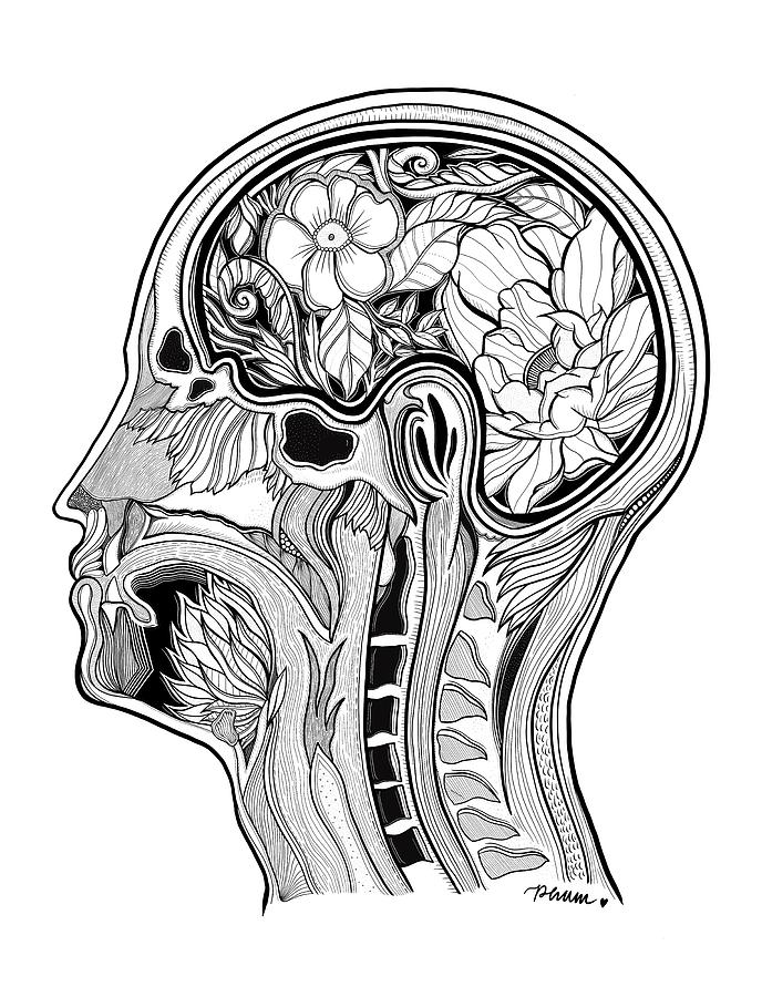 Brain Anatomy Drawing | Free download on ClipArtMag