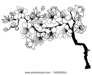 Cherry Blossom Tree Drawing Tumblr Free download on