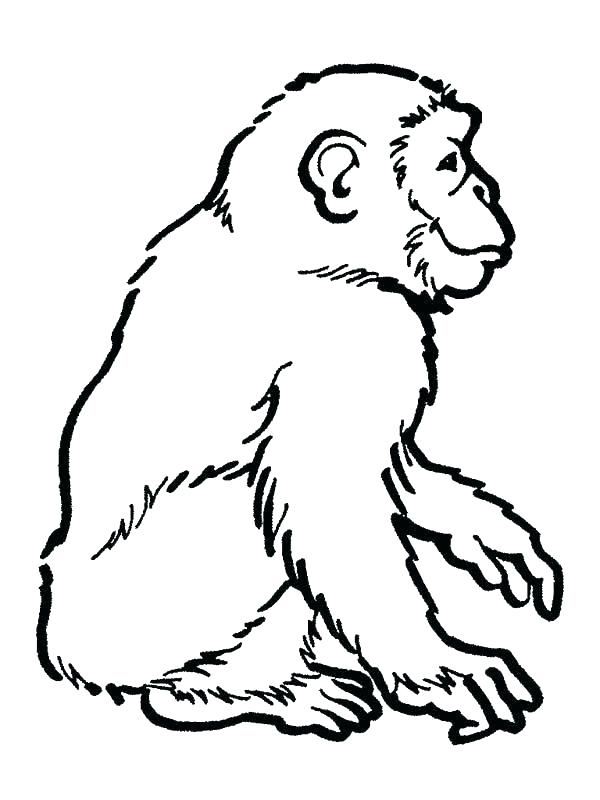 chimpanzee drawing free download