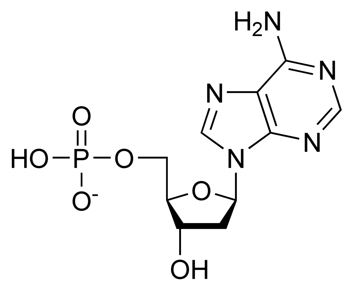 hight resolution of 1200x988 nucleotide