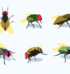 1400x980 firefly vectors [ 1400 x 980 Pixel ]