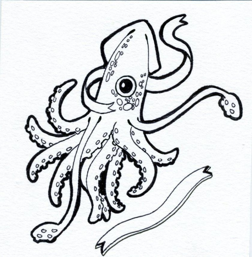 giant squid drawing  free download on clipartmag