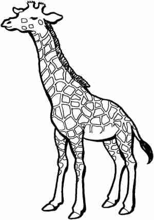 giraffe easy drawing biro clipartmag