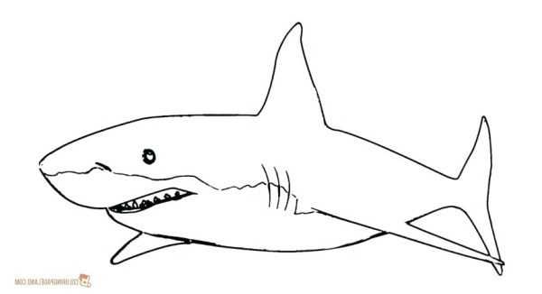 great white shark coloring pages # 19