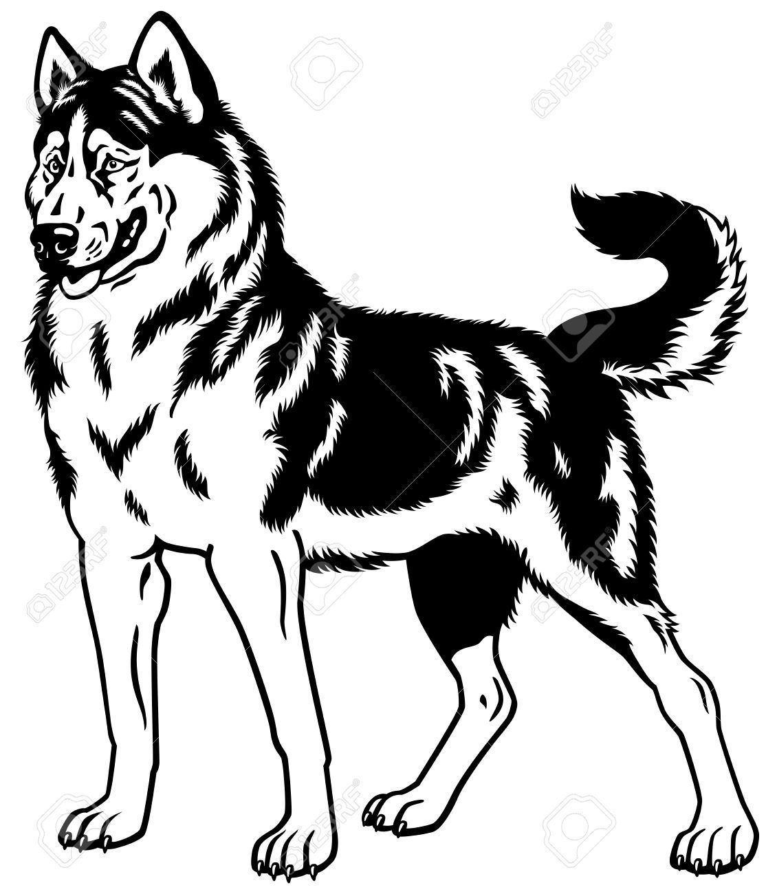Collection Of Husky Clipart