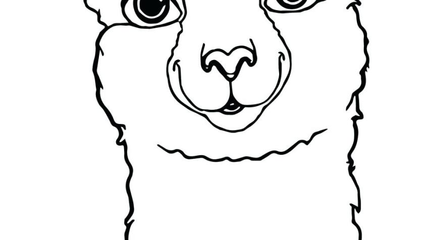 collection of llama clipart  free download best llama
