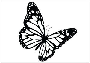 butterfly coloring pages monarch printable outline sketch flying drawing drawings butterflies draw pencil female sketches fun clipartmag butter paintingvalley