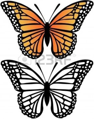 side butterfly drawing monarch clipartmag