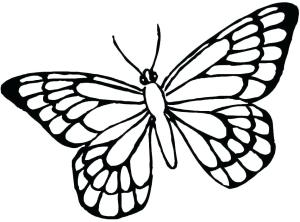 butterfly monarch side drawing pages printable colouring clipartmag