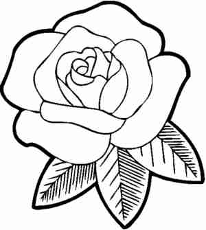 outline rose drawing flower easy clipartmag
