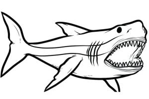 draw shark drawing megalodon sketch easy step sharks fish sketches clipartmag sea basic paintingvalley