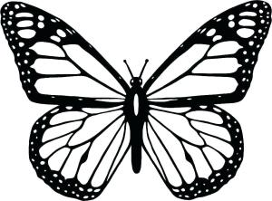 butterfly outline simple drawing clipart clipartmag