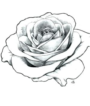 rose tattoo outline drawing easy sketch roses step drawings titanic traditional flowers draw open simple clipartmag steps clipart beginners paintingvalley