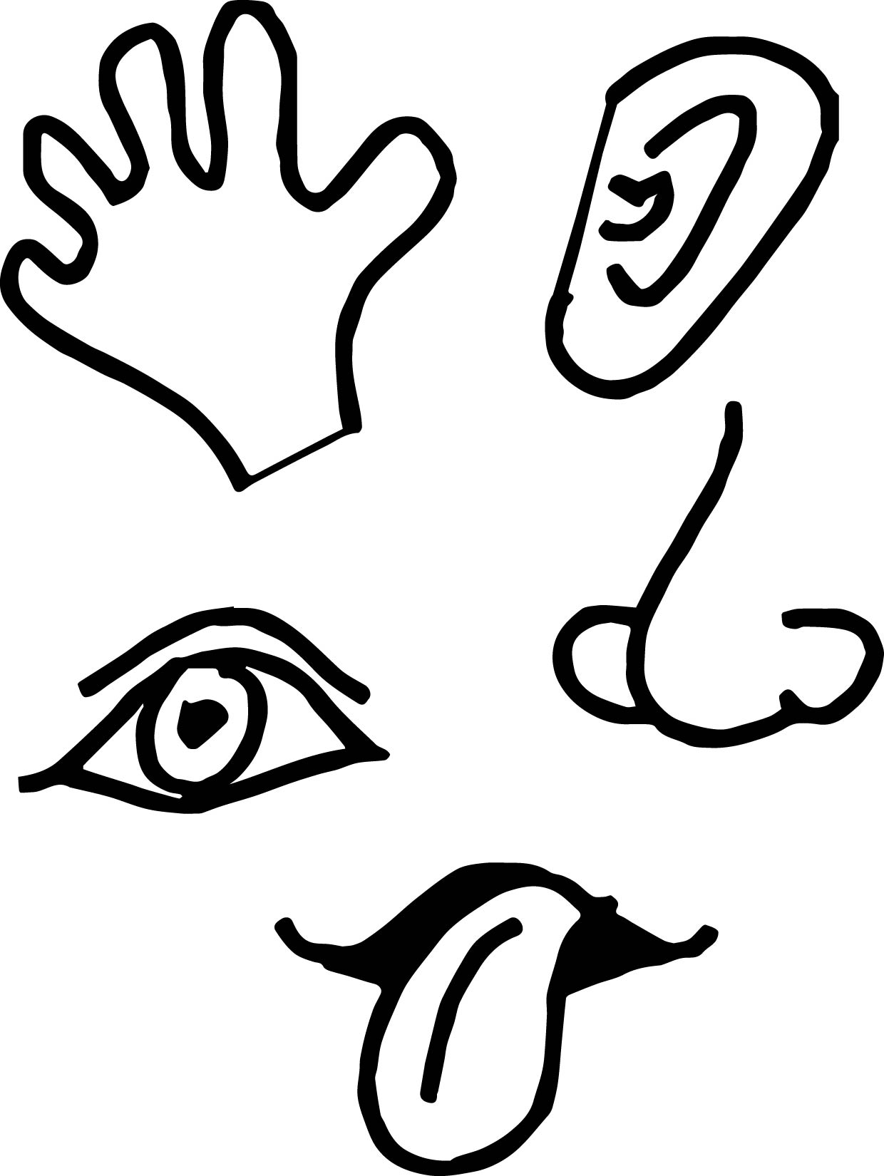 Collection Of Senses Clipart