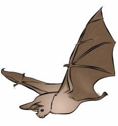 bats clipart [ 1015 x 1024 Pixel ]