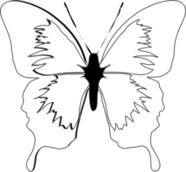 Black And White Butterflies Pictures Free download on