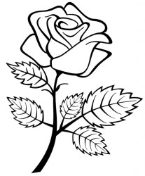 Black And White Rose Drawing Free download on ClipArtMag