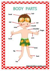 body parts worksheet clipart clipartmag getdrawings