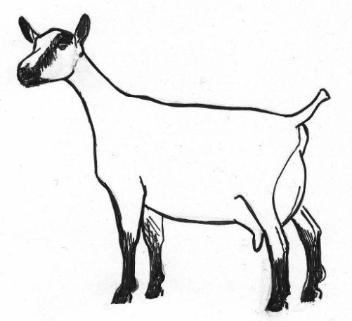 Boer Goat Silhouette Free download best Boer Goat
