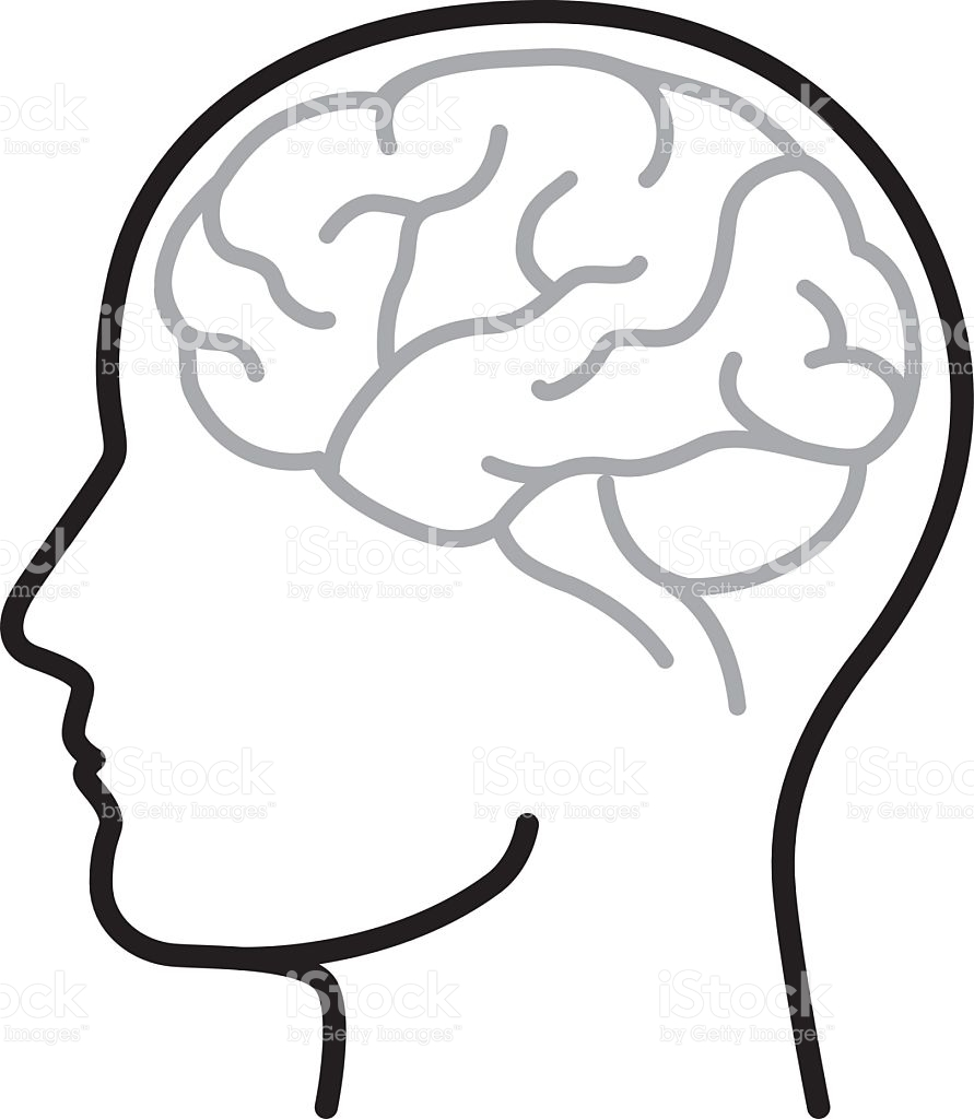 medium resolution of 891x1024 brain clipart vector art