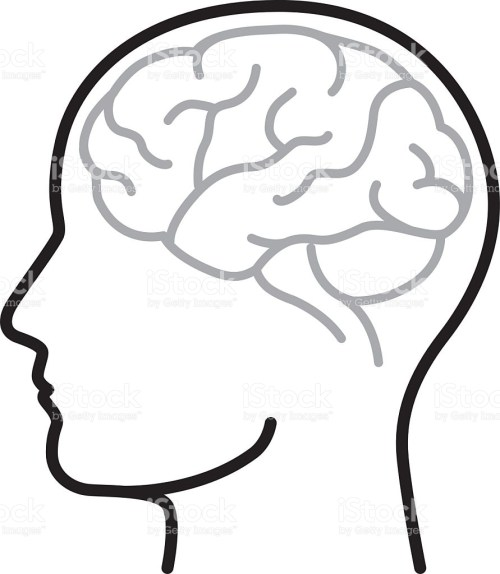small resolution of 891x1024 brain clipart vector art