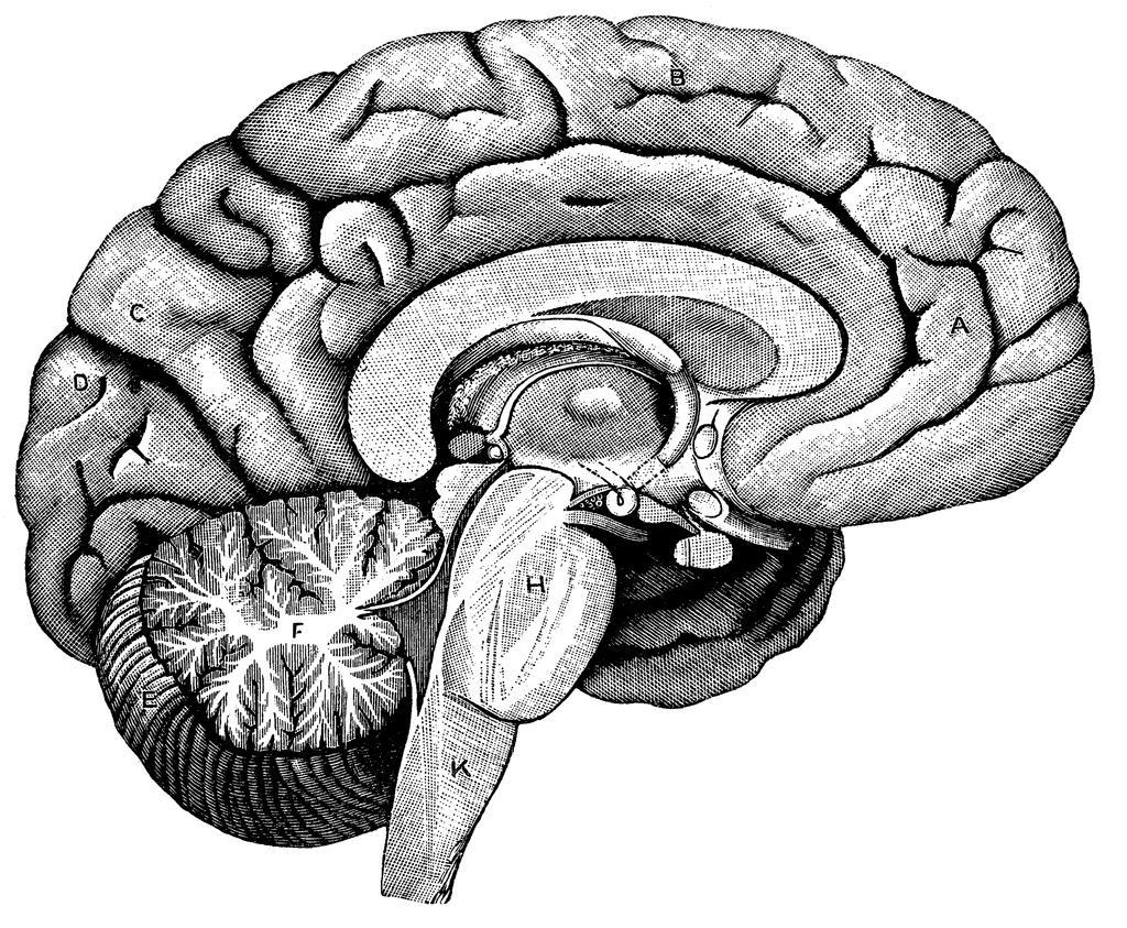 Brain Clipart Black And White
