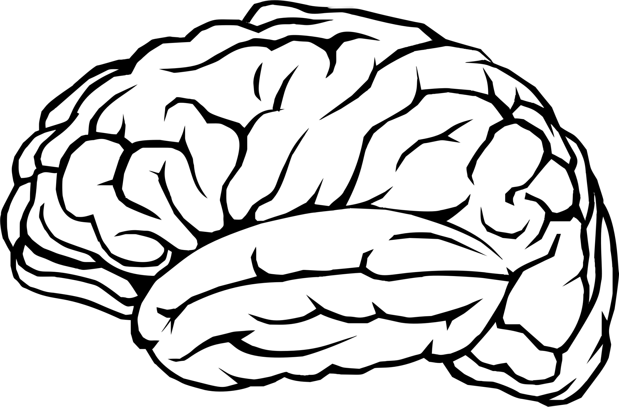 hight resolution of 2306x1517 clip art brain clipart collection