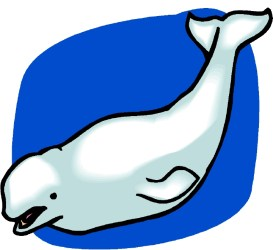 whale clipart beluga cartoon humpback drawing clip line angel clipartmag library