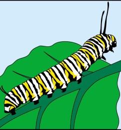 1200x1200 caterpillar clipart monarch caterpillar [ 1200 x 1200 Pixel ]