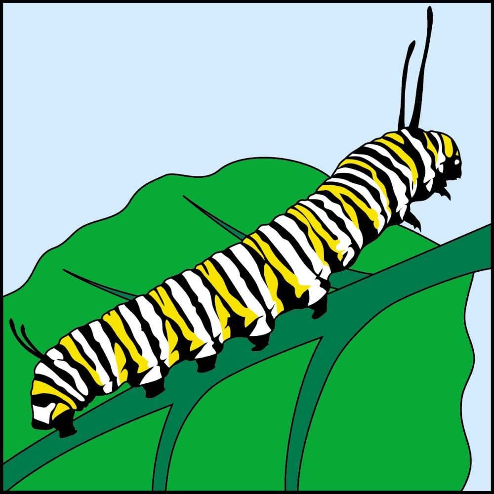 medium resolution of 1200x1200 caterpillar clipart monarch caterpillar