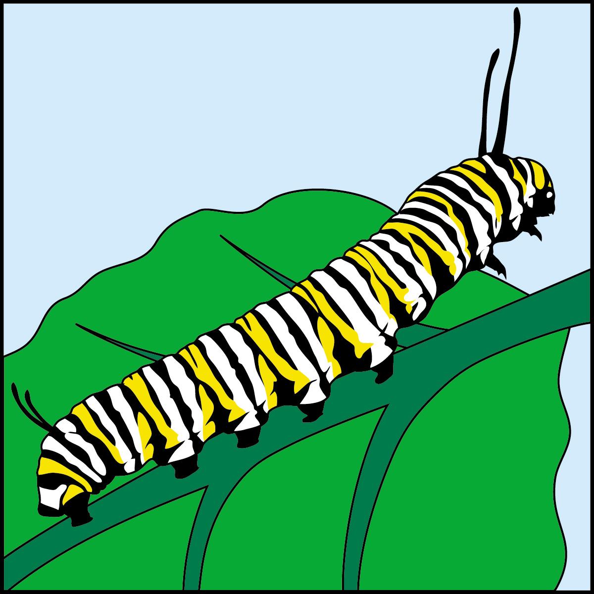 hight resolution of 1200x1200 caterpillar clipart monarch caterpillar