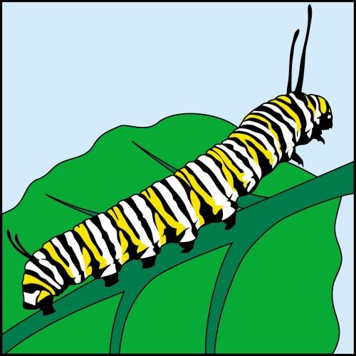 small resolution of 1200x1200 caterpillar clipart monarch caterpillar