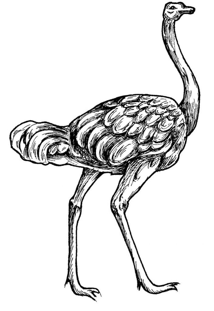 Coloring Pages Animals For Adults Free Download Best