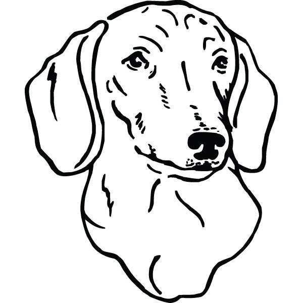 Dachshund Dog Ts