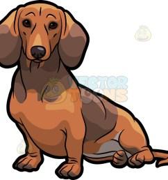 1024x973 an adorable dachshund dog sitting down dachshund dog dachshunds [ 1024 x 973 Pixel ]