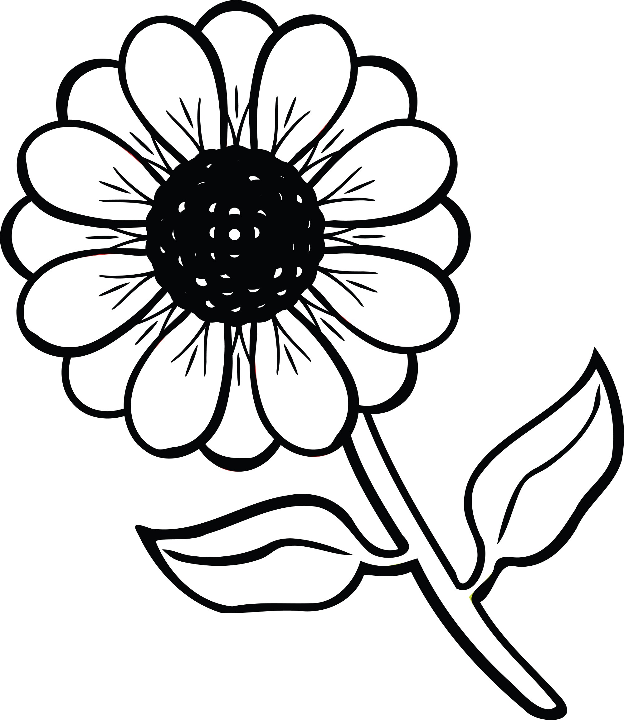 hight resolution of 4000x4620 daisy clipart flower plant