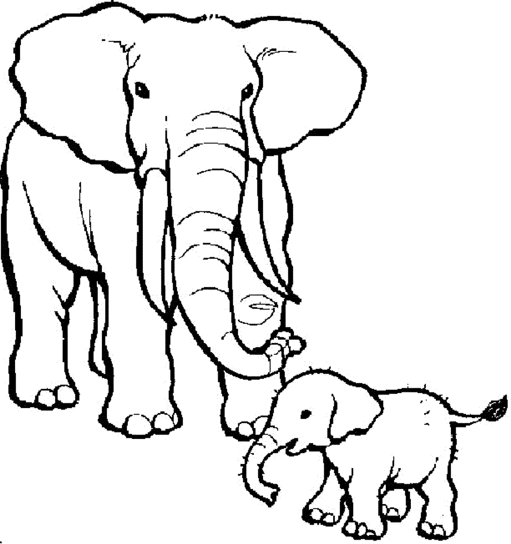 Elephant Coloring Pages Free Download Best Elephant Coloring