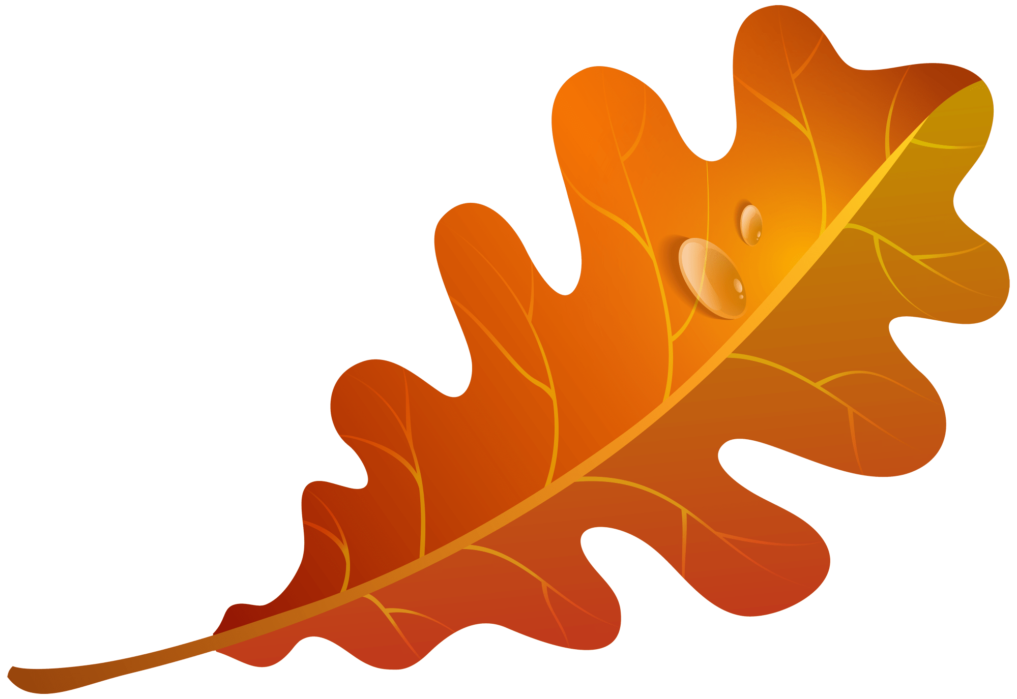hight resolution of 5000x3439 edit and free download fall orange leaf png clipart image