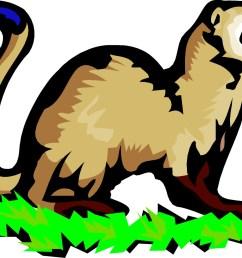 1500x1074 ferret clipart mink [ 1500 x 1074 Pixel ]