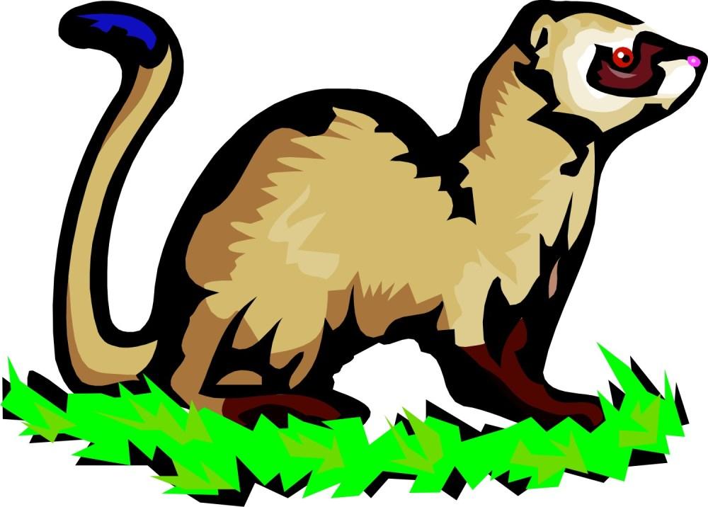 medium resolution of 1500x1074 ferret clipart mink