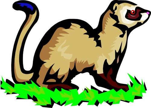 small resolution of 1500x1074 ferret clipart mink