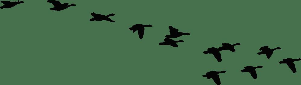 medium resolution of 2312x658 flock of birds clipart goose