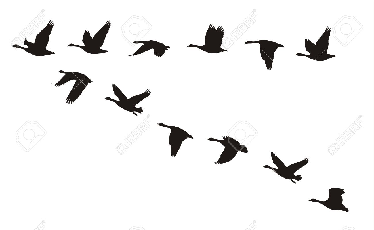 Flying Duck Silhouettes