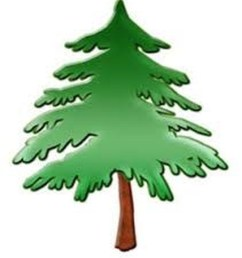 900x1015 pine tree clipart forest school [ 900 x 1015 Pixel ]