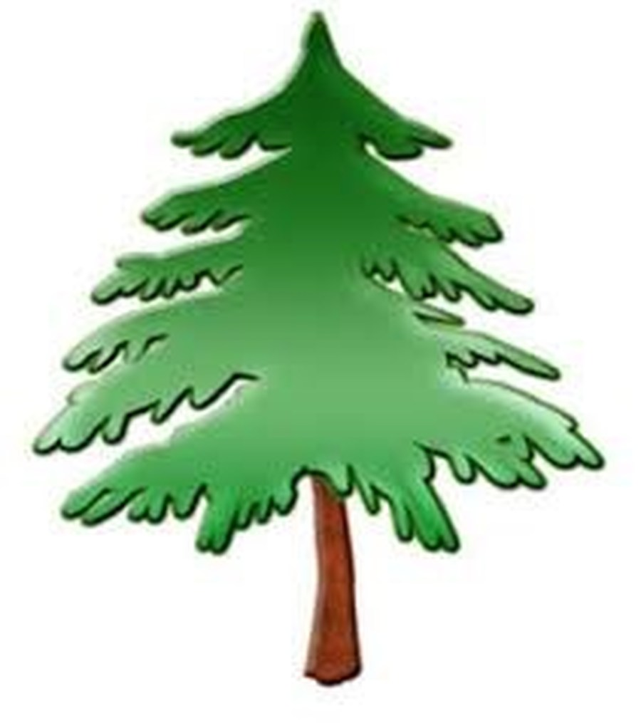 hight resolution of 900x1015 pine tree clipart forest school