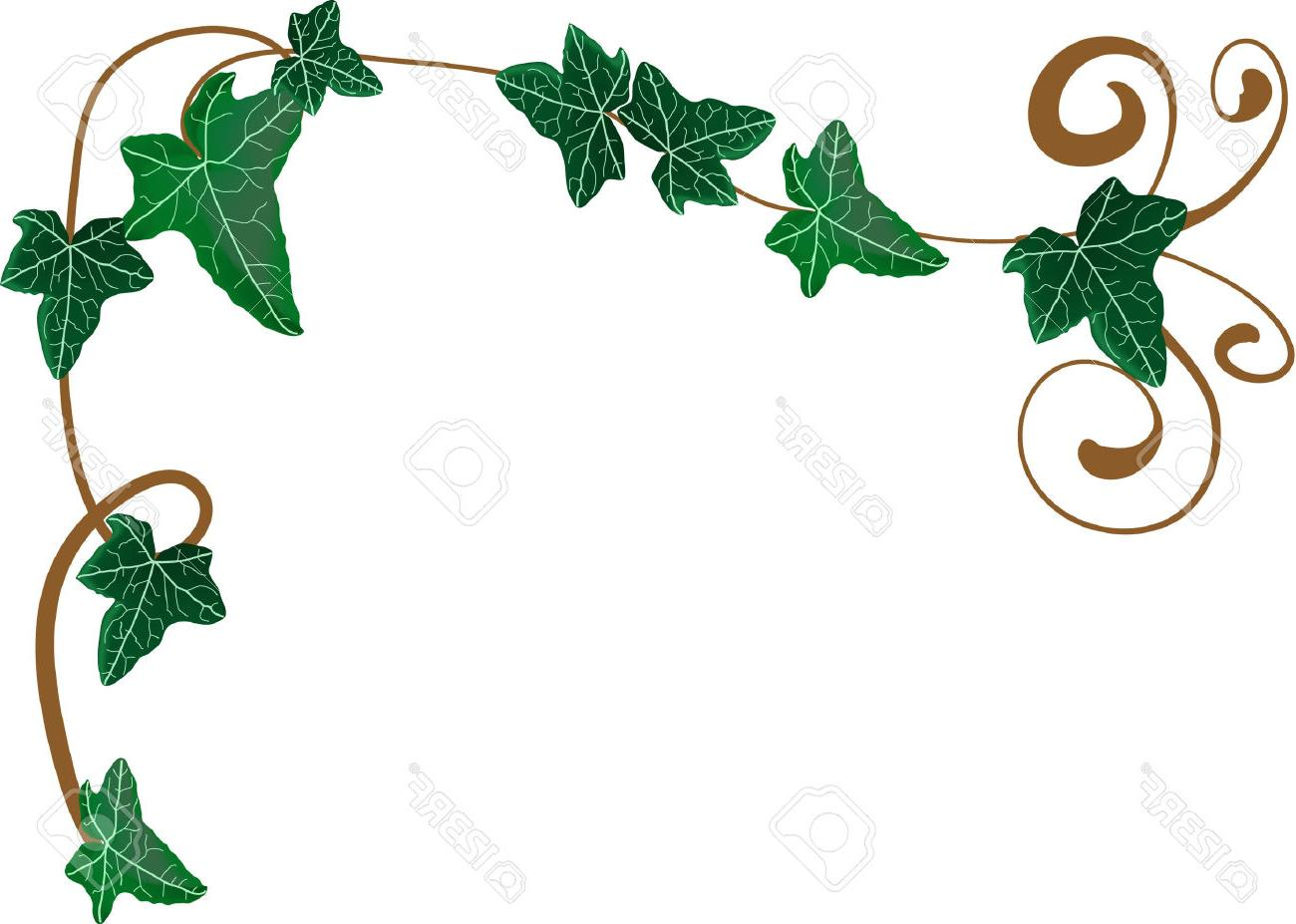 hight resolution of 1300x927 hd vector illustration of frame from ivy stock border design