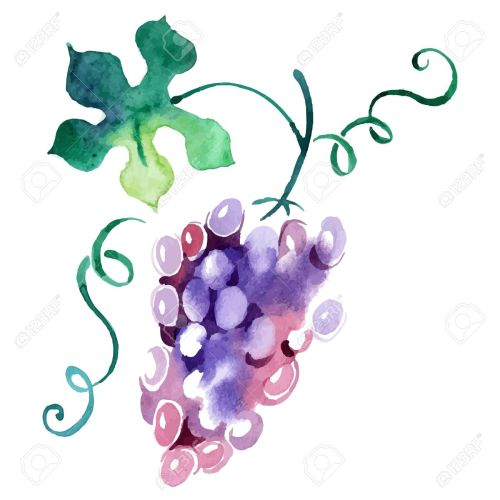 small resolution of 1300x1300 11 439 vineyard stock illustrations cliparts and royalty free