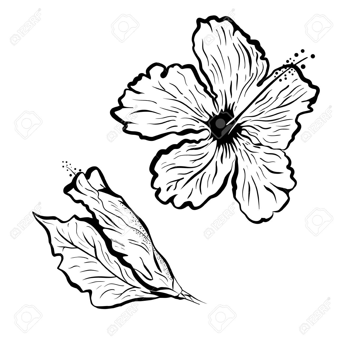 Hawaiian Flower Clipart Outline